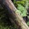 Ahveniston ulkoilu ja luonnonsuojelualue